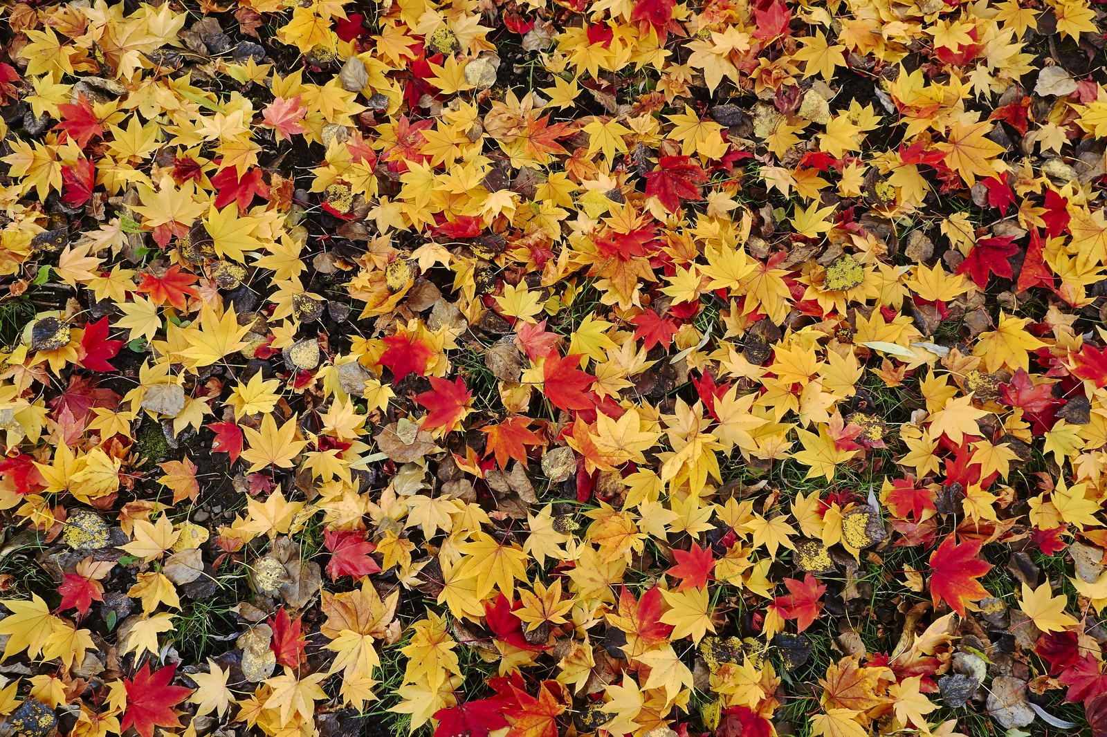 「一面の落ち葉」の写真