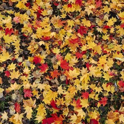 「一面の落ち葉」の写真素材