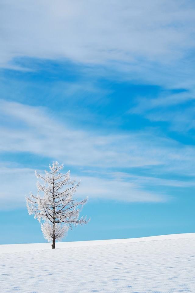 雪の中の一本の木の写真
