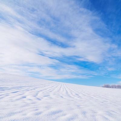 「北海道の広大な雪原」の写真素材