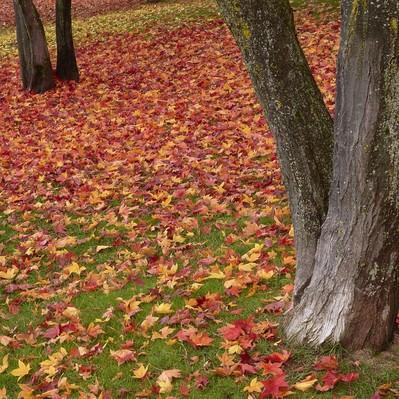 緑の芝と一面の落ち葉の写真