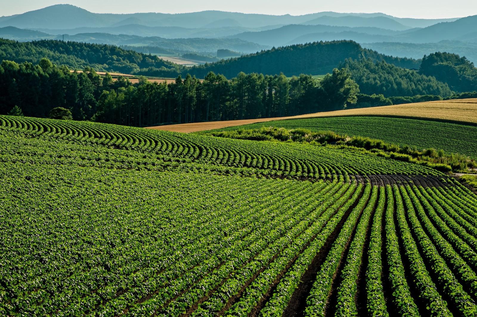 「美瑛の畑」の写真