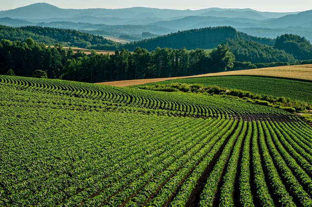 美瑛の畑の写真