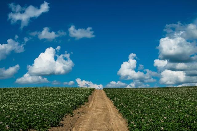 じゃがいも畑と一本道の写真