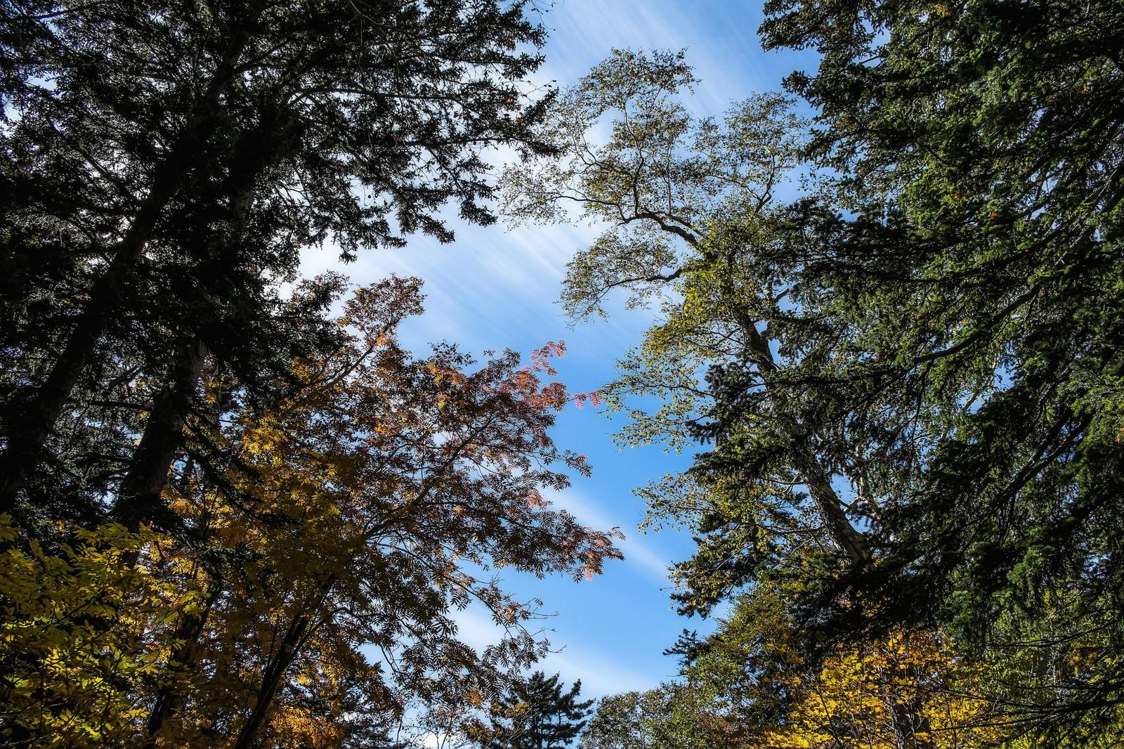 「青空と木々青空と木々」のフリー写真素材を拡大