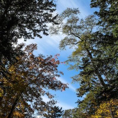「青空と木々」の写真素材