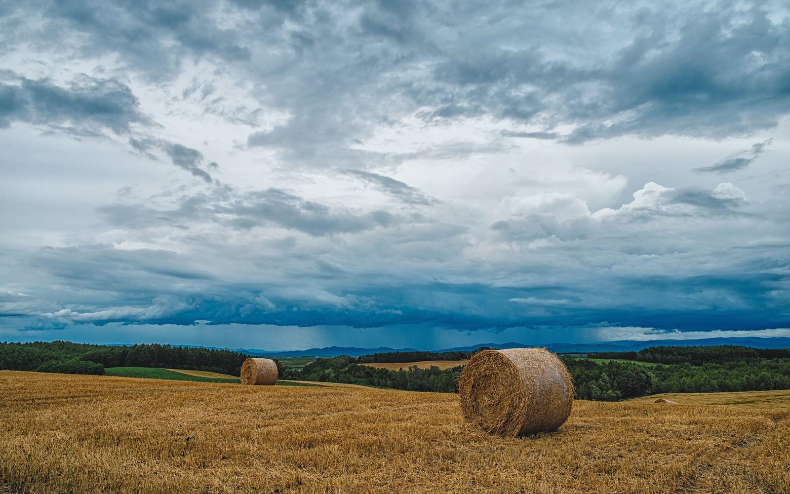 「北海道の牧草ロール」の写真