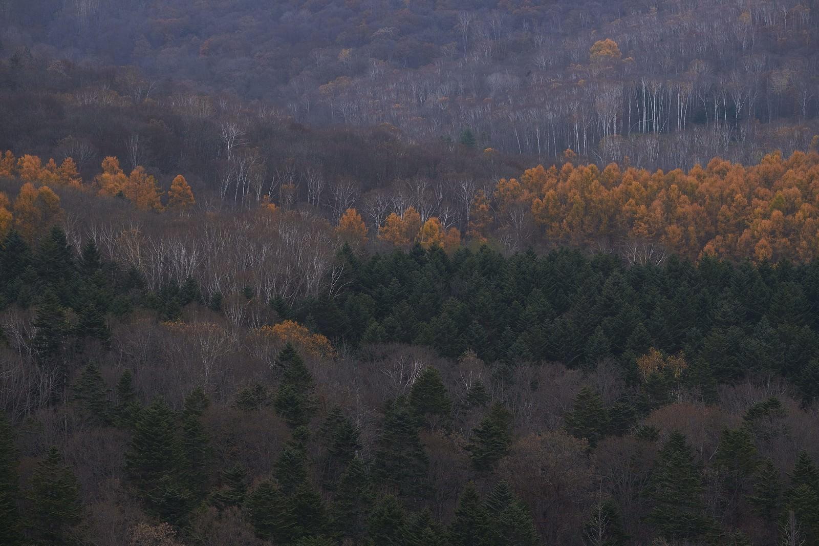 「冬に近づく山と木々」の写真