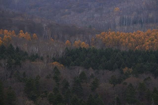 冬に近づく山と木々の写真