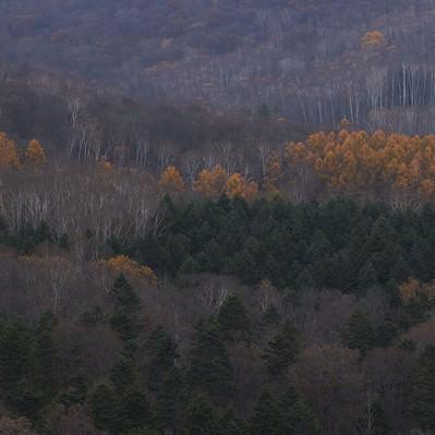 「冬に近づく山と木々」の写真素材
