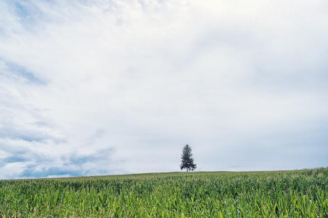 草原の中に生える一本の木の写真