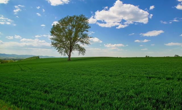 哲学の木の写真