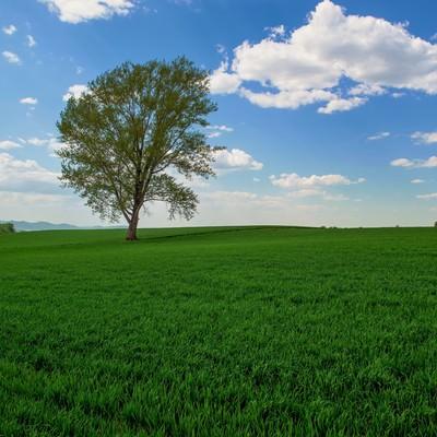 「哲学の木」の写真素材
