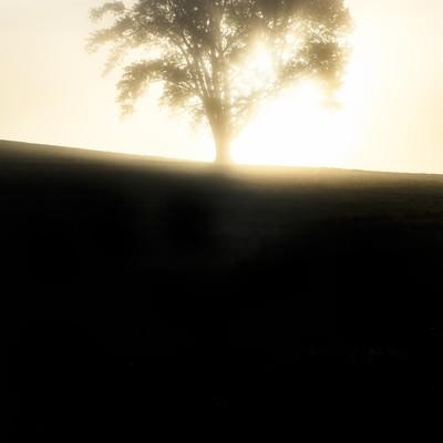 光に包まれた一本の木の写真