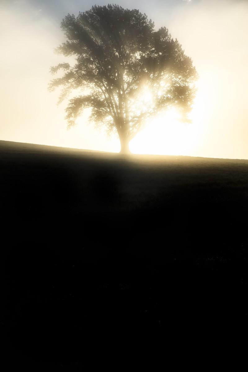 「光に包まれた一本の木」の写真