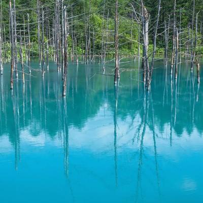 「青い池」の写真素材