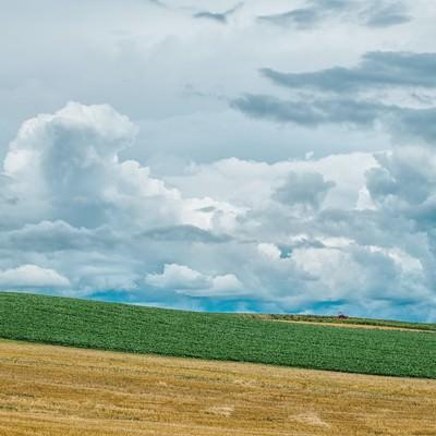「美瑛の丘」の写真素材