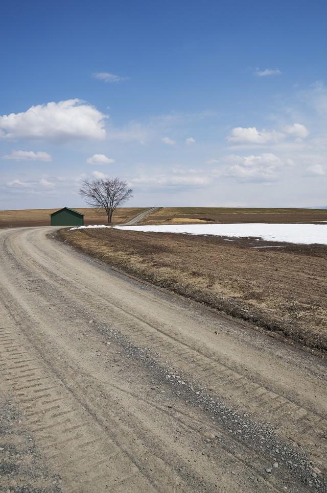 雪解けの砂利道の写真