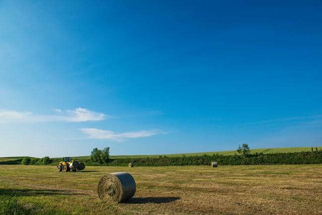 北海道の広大な大地と牧草ロールの写真