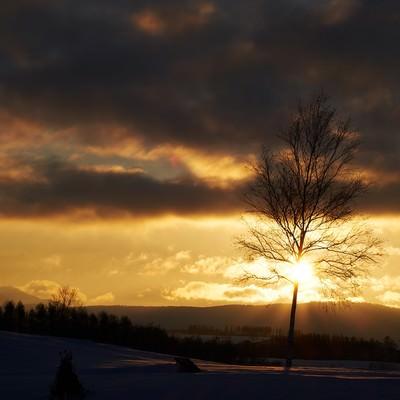 冬の夕暮れの写真