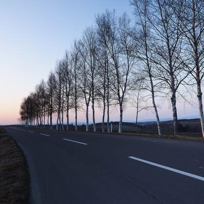 「白樺と直線道路」の写真素材