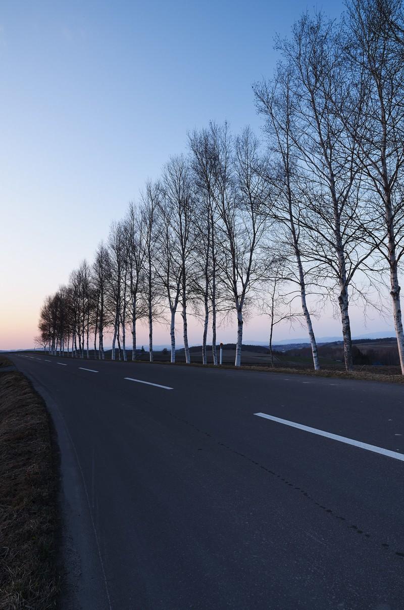 「白樺と直線道路」の写真