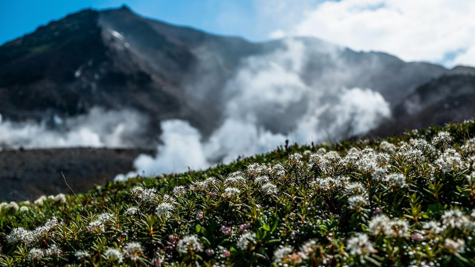 「旭岳の水蒸気」の写真