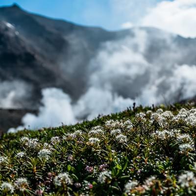 「旭岳の水蒸気」の写真素材