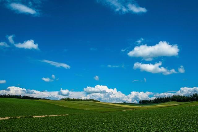 広大な農場と青空の写真
