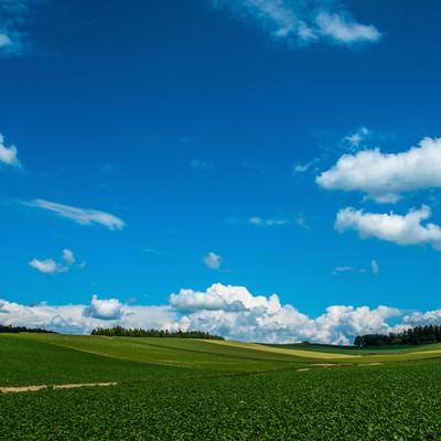 「広大な農場と青空」の写真素材
