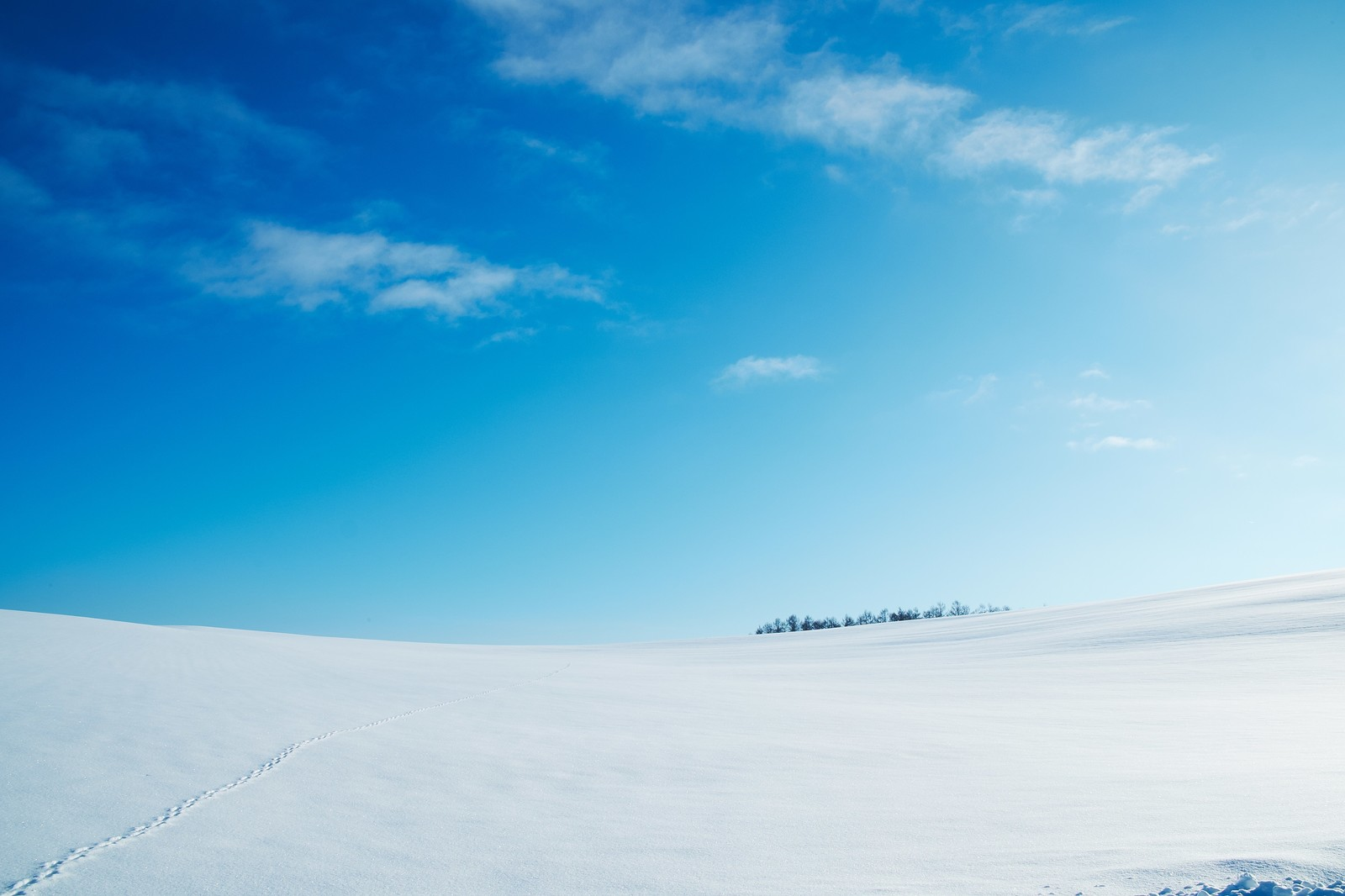 「雪原と足跡」の写真