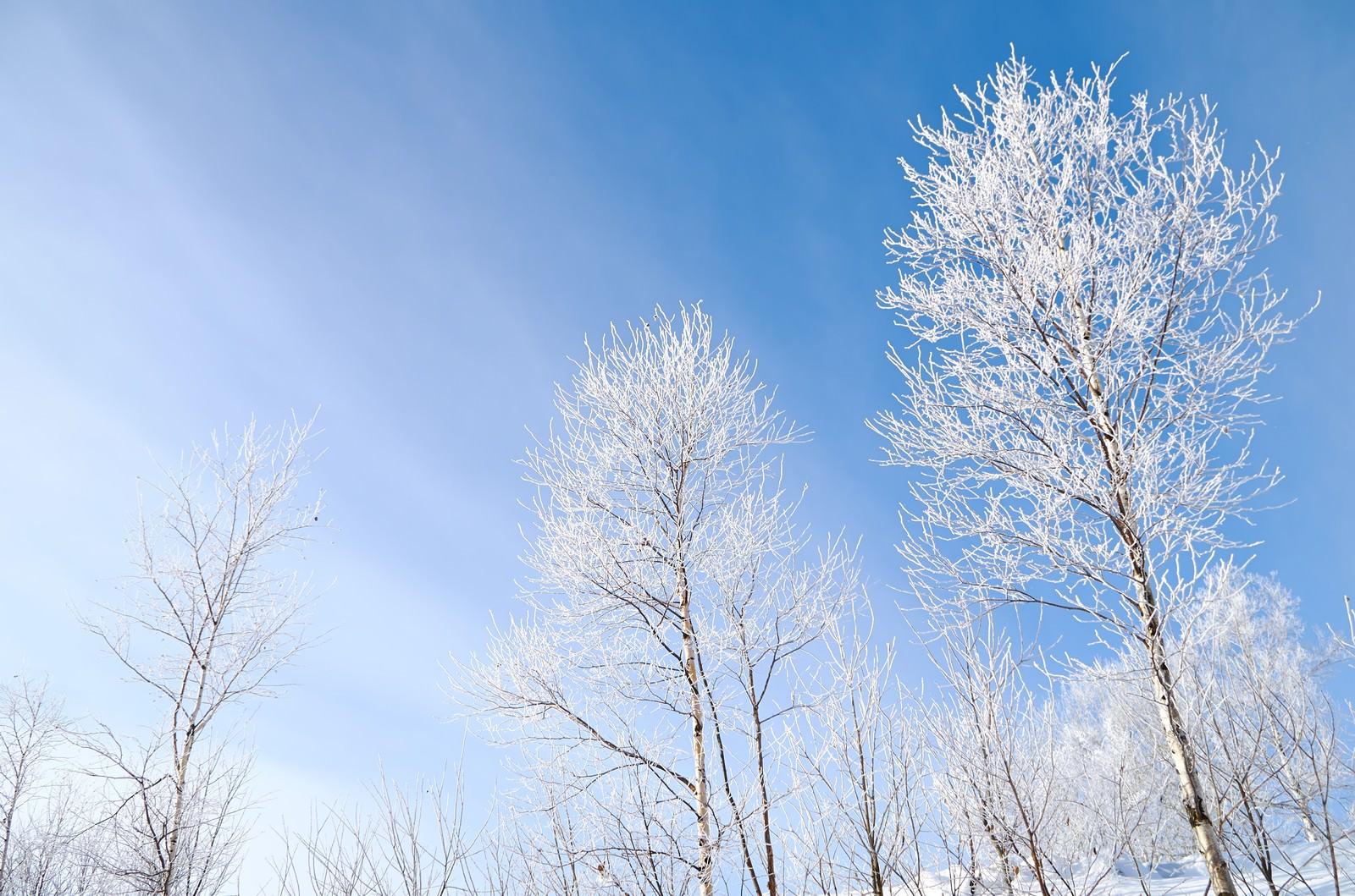 「青空と霧氷青空と霧氷」のフリー写真素材を拡大