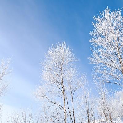 「青空と霧氷」の写真素材