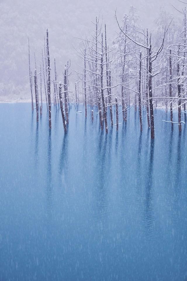 初雪の振る青い池の写真