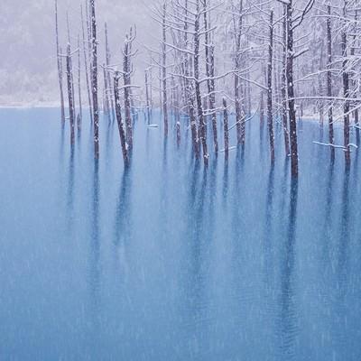 「初雪の振る青い池」の写真素材