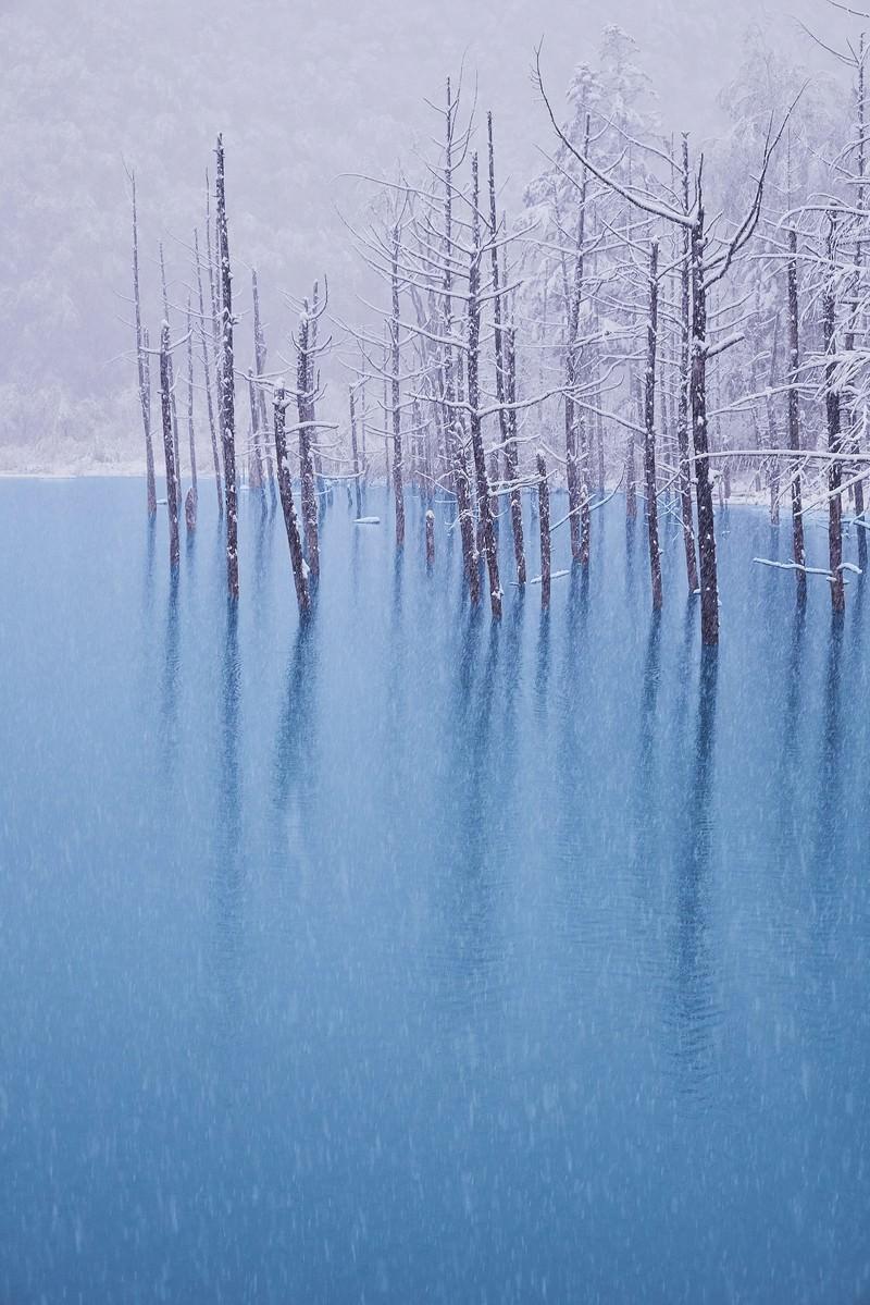 「初雪の振る青い池」の写真