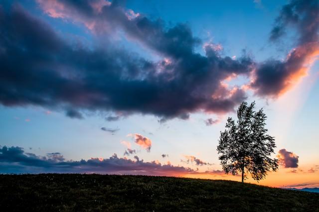 「日が落ちた草原と一本の木(美瑛)」のフリー写真素材