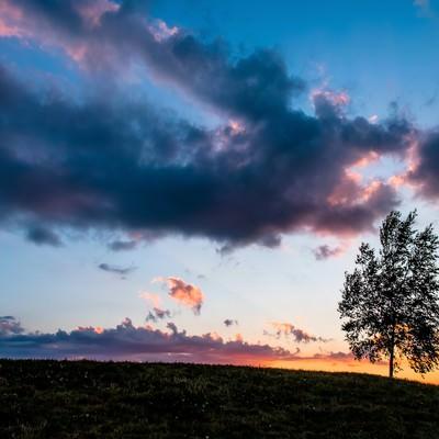 「日が落ちた草原と一本の木(美瑛)」の写真素材