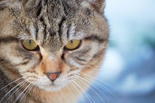 険しい表情の猫の写真