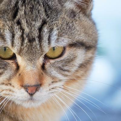「険しい表情の猫」の写真素材