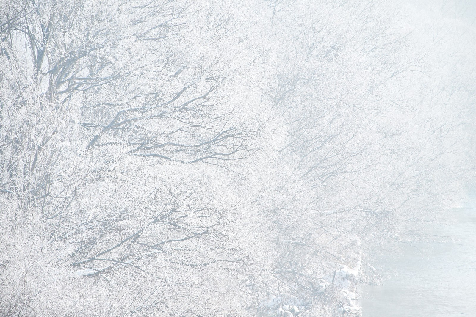 「樹氷」の写真