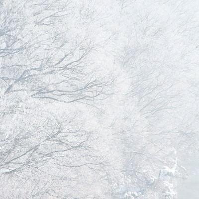 「樹氷」の写真素材
