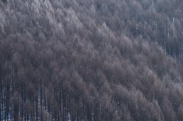 霧氷と林の写真