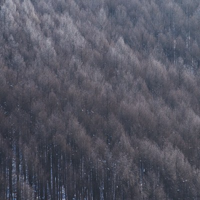 「霧氷と林」の写真素材