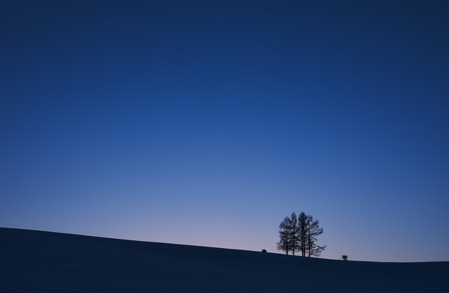 夕暮れにただずむ5本の木の写真