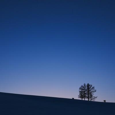 「夕暮れにただずむ5本の木」の写真素材