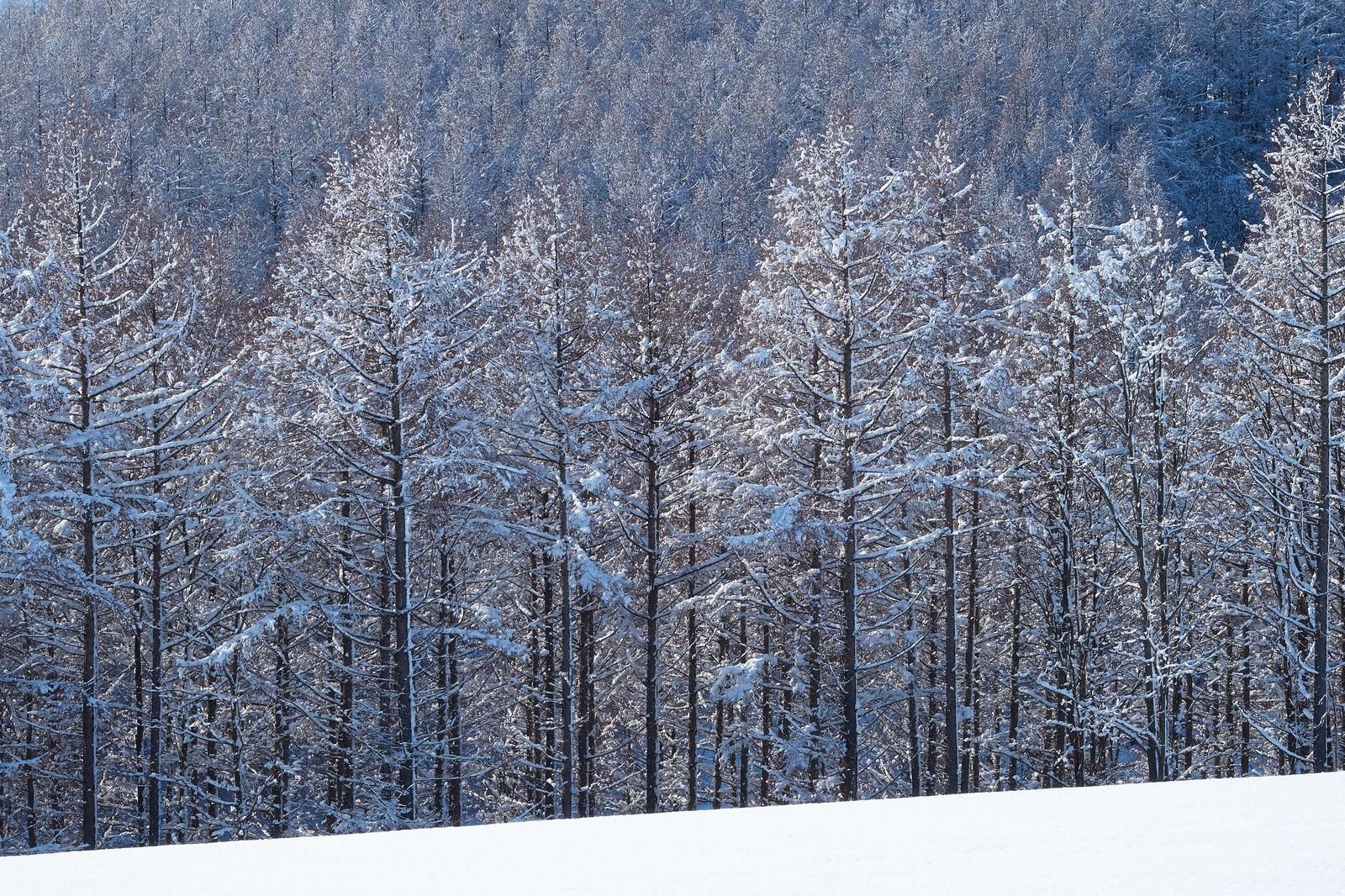 「雪と林」の写真