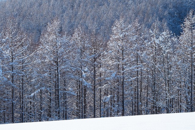 雪と林の写真