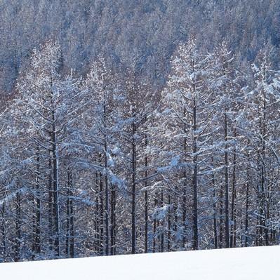 「雪と林」の写真素材