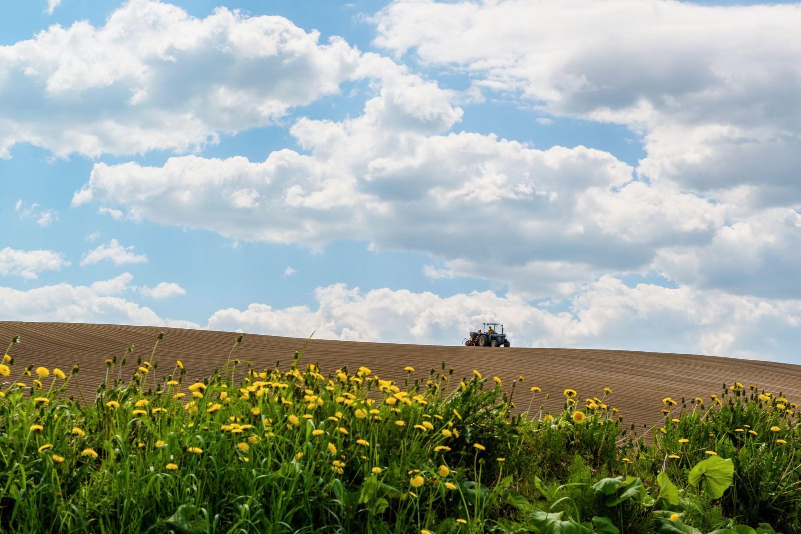 「美瑛の耕す畑と青空美瑛の耕す畑と青空」のフリー写真素材を拡大